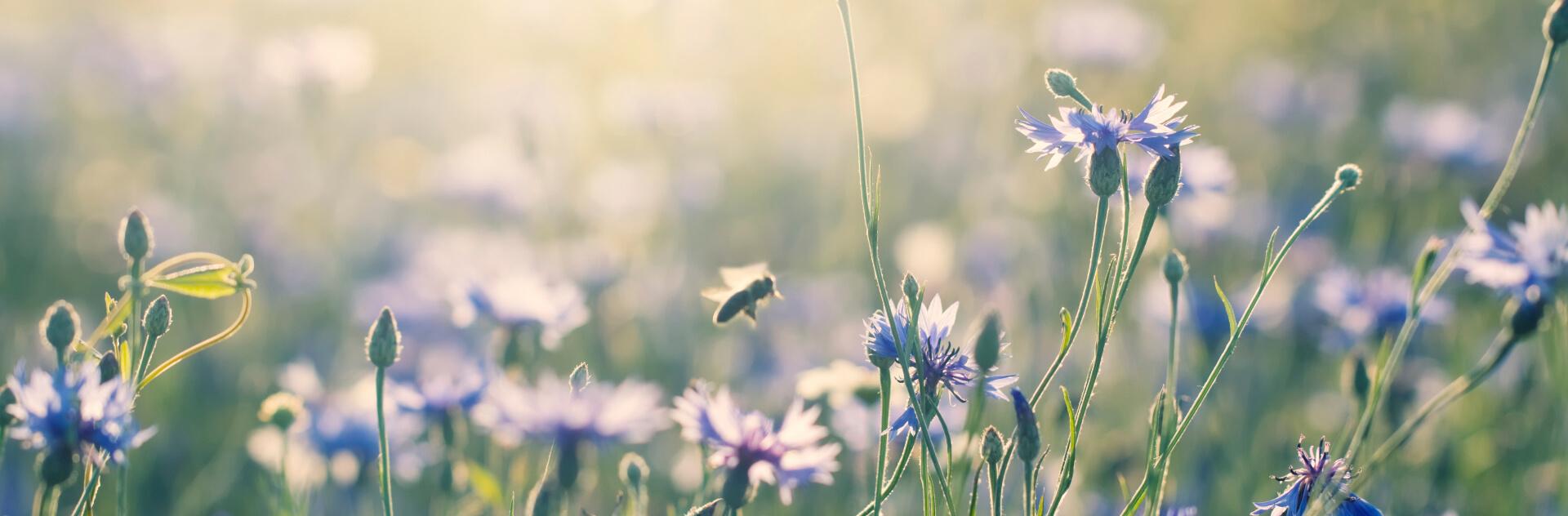 préserver la biodiversité en cultivant un jardin