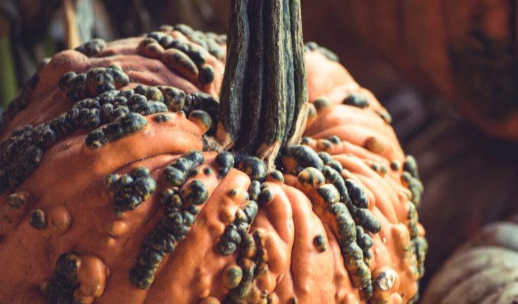 limiter le gaspillage des fruits et les légumes moches